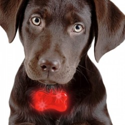 Colgante Led Luminoso para Mascotas, Identificador Perros con forma Hueso.