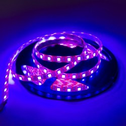 Tira LED  (5m)  LUZ NEGRA UV Ultravioleta 60Leds/m  24V  IP65 IMPERMEABLE